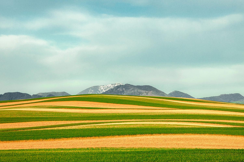 P6-Klassy-Strip-Crops-1.jpg