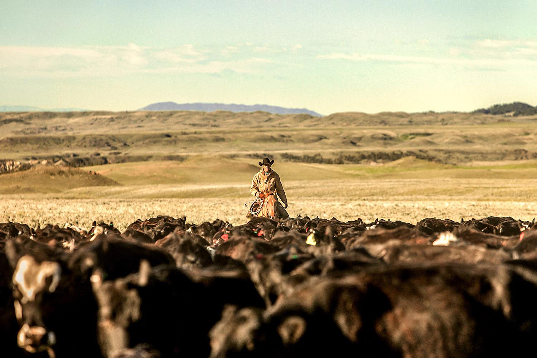 P6-Klassy-Cowboy-Cattle-1.jpg