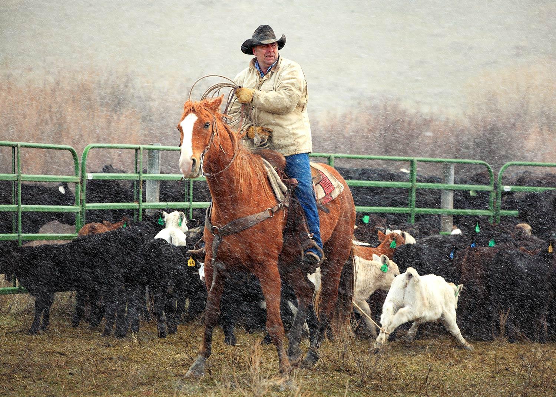 P6-Klassy-Cowboys-Essay-1.jpg