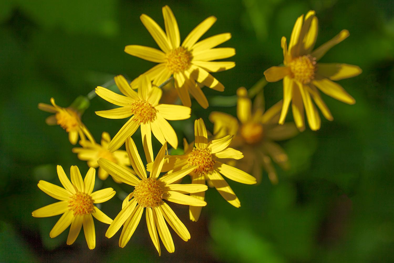 Glacier Flowers