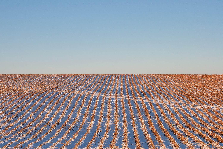 Cut Corn Rows