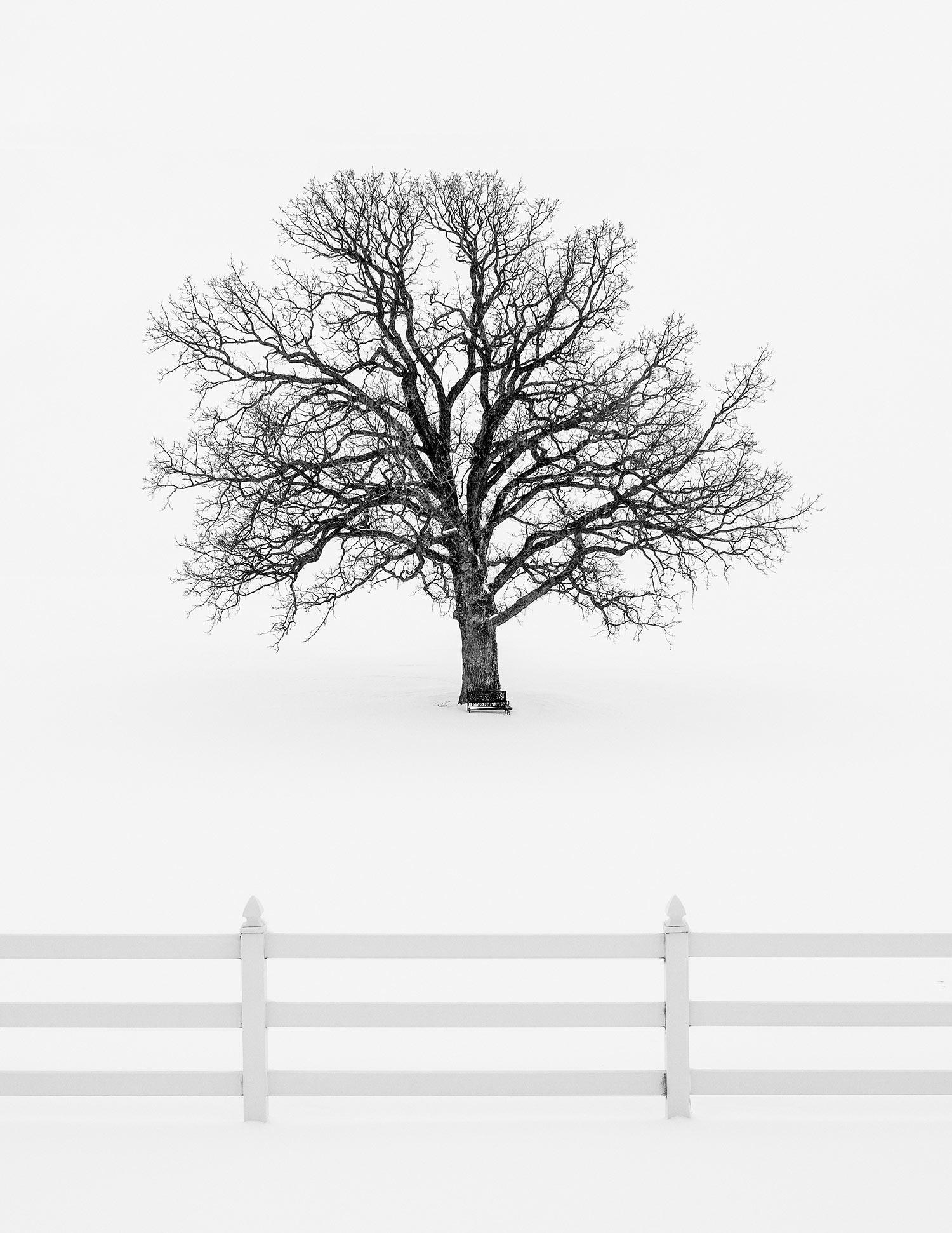 Forsaken Winter