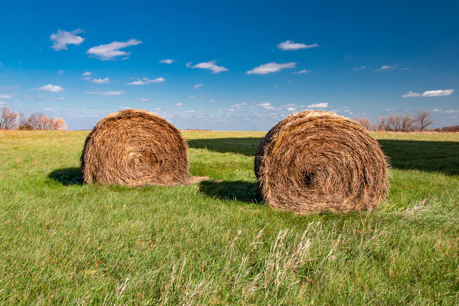 Two Bales