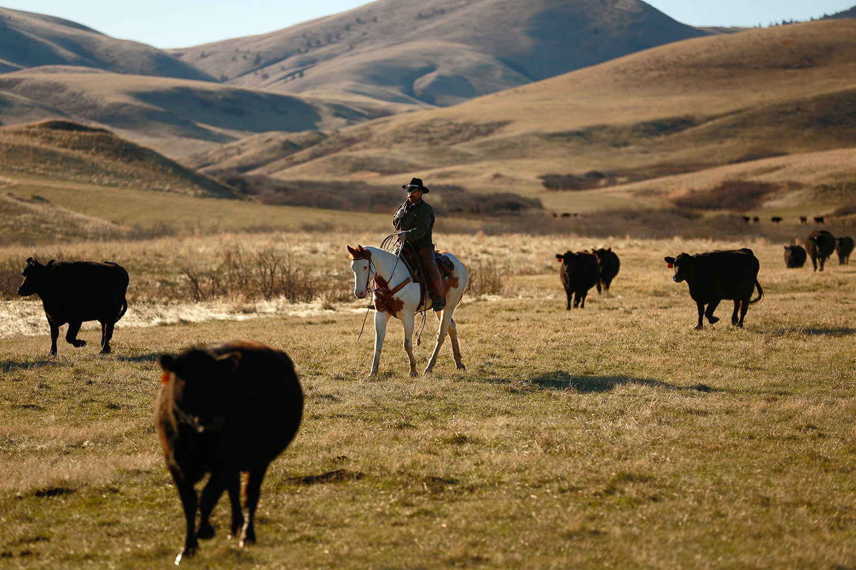 In the Midst of the Herd