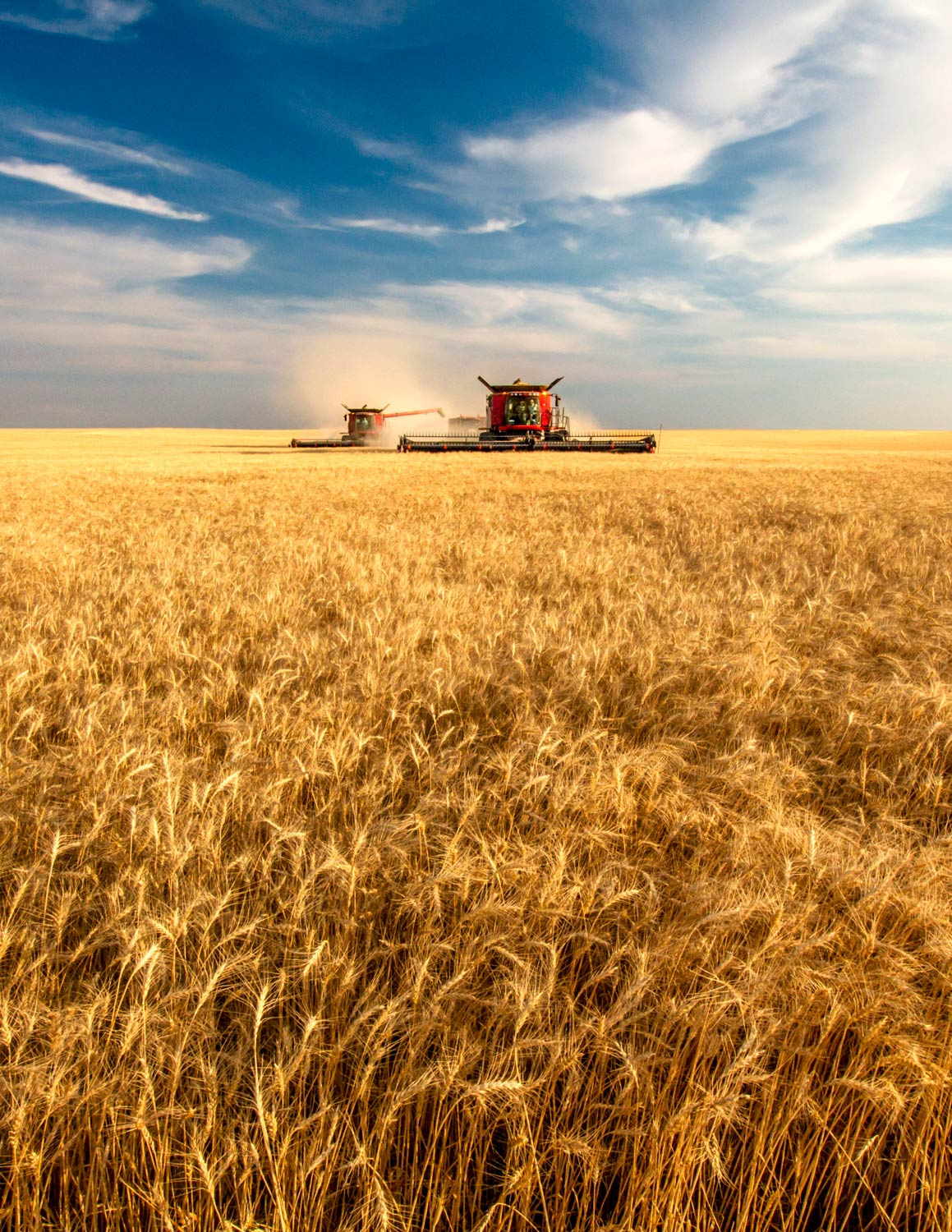 Combines Cutting Wheat