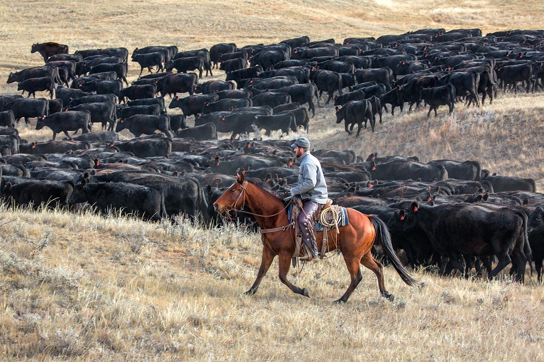 Pushing a Herd of Blacks