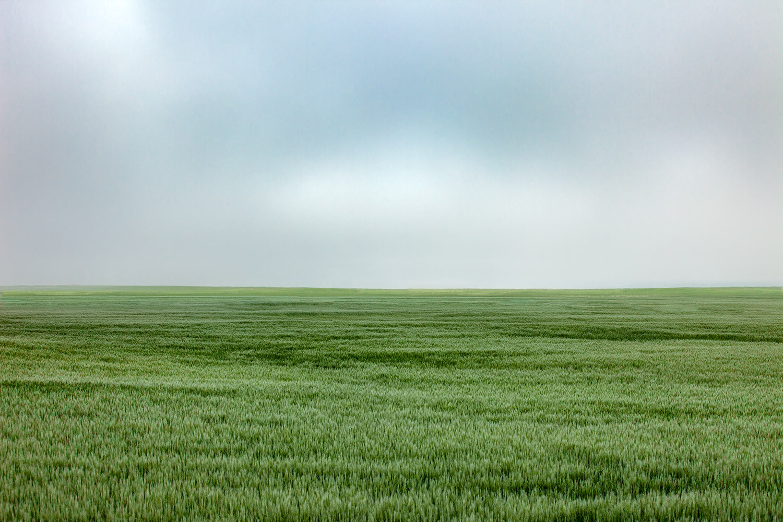Fort Benton Wheat