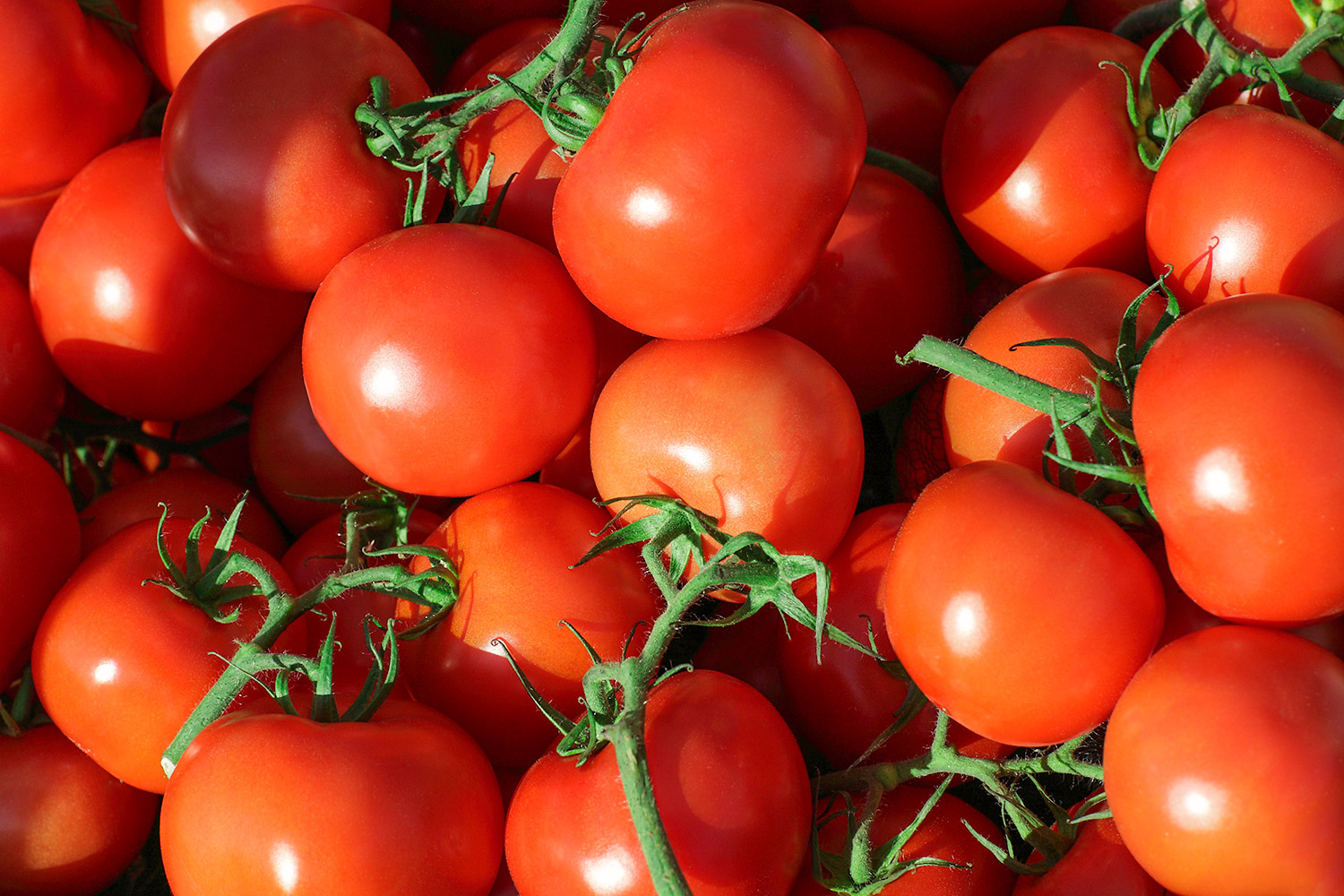 Teaming With Tomatoes