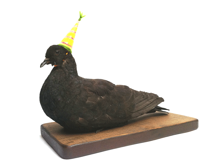 pigeon-party.png
