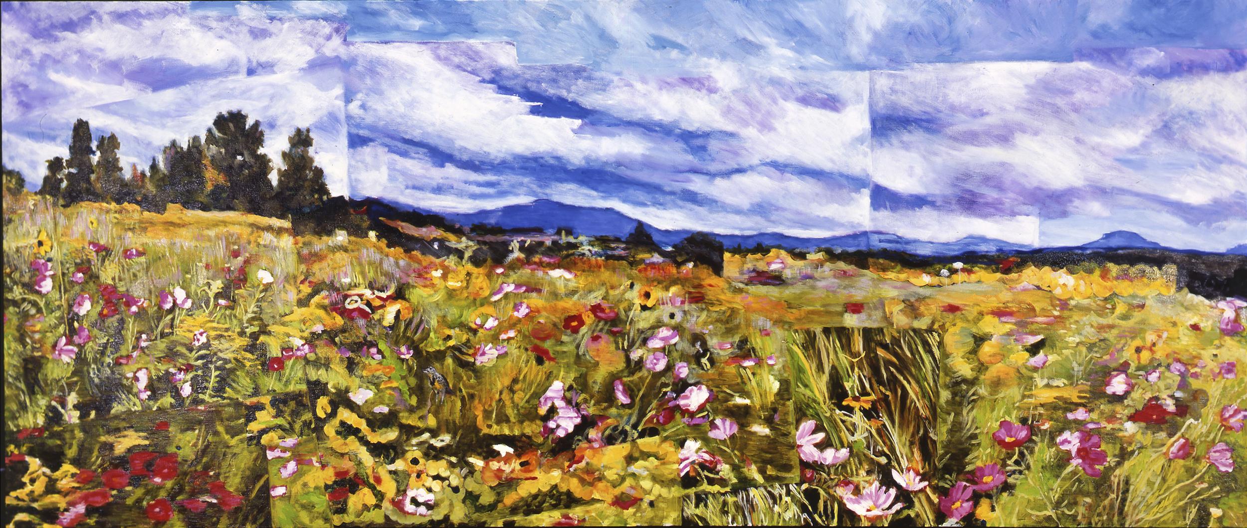 16 Field Panorama.jpg