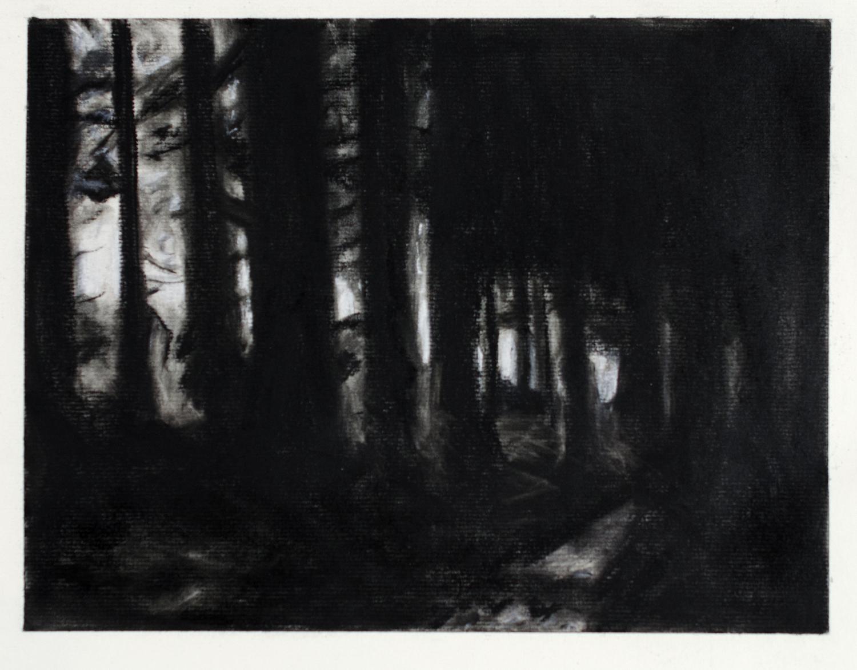 Goleuni Drwy Binwydd 1