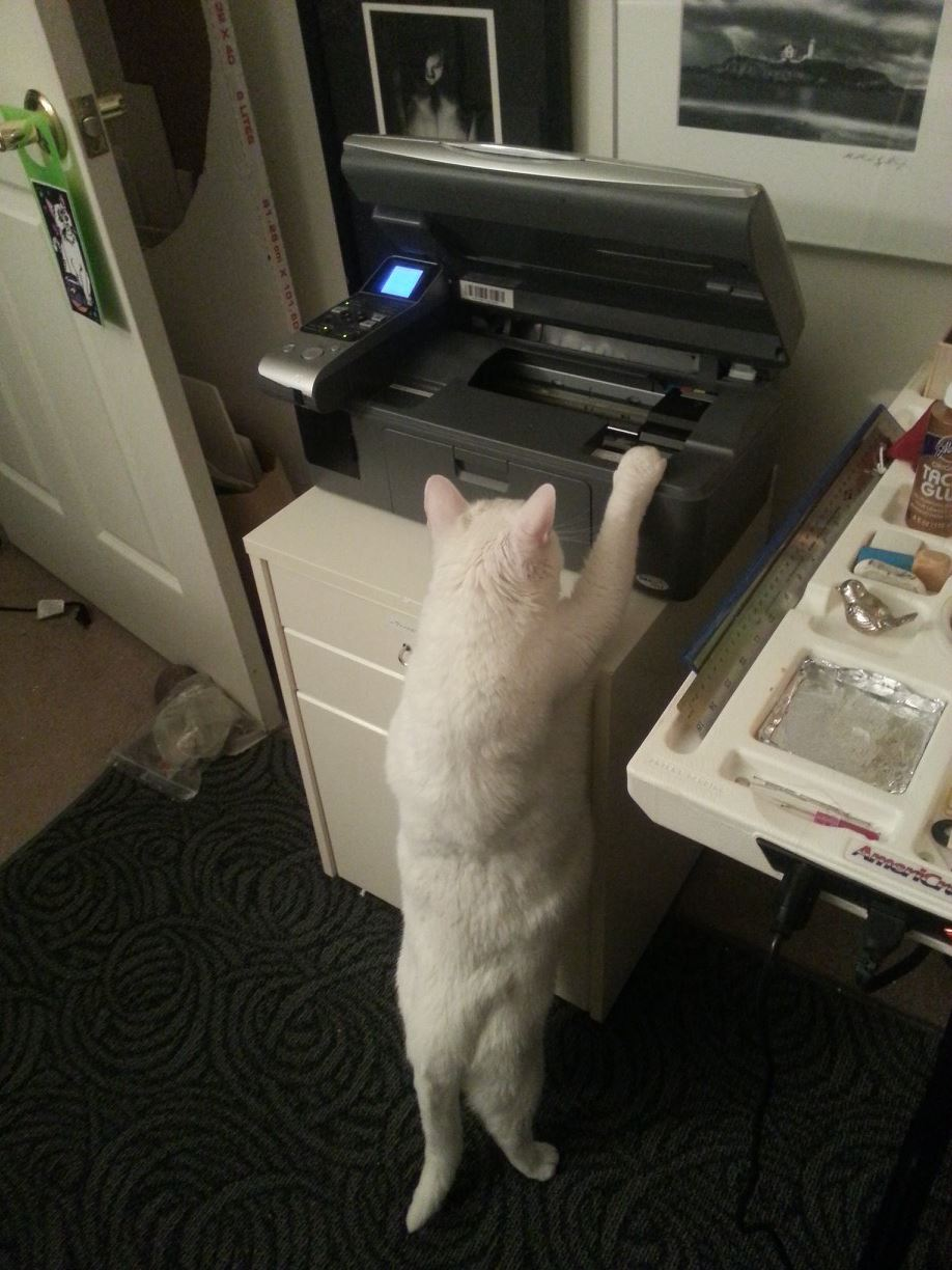My Assistant, Linq, retrieving images from the printer.