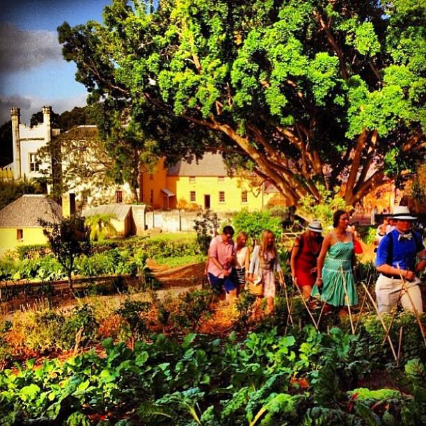 @aleciacw garden.jpg