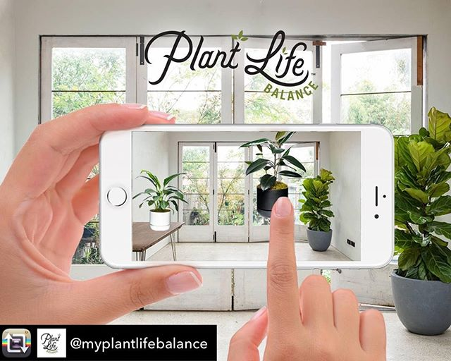 "Have you seen this wild @myplantlifebalance app? It's brand new and we love it. It lets you easily work out how to green up your space and reap the beautiful rewards.🌵🌳🌿😃 Repost from @myplantlifebalance: ""Are you wanting to green up your space? 🌿🍃 🌳 The Plant Life Balance app allows you to drop and drag plants over a photo of your room to help you visualise what your new green space will look like. Click the link in bio to download the app."""