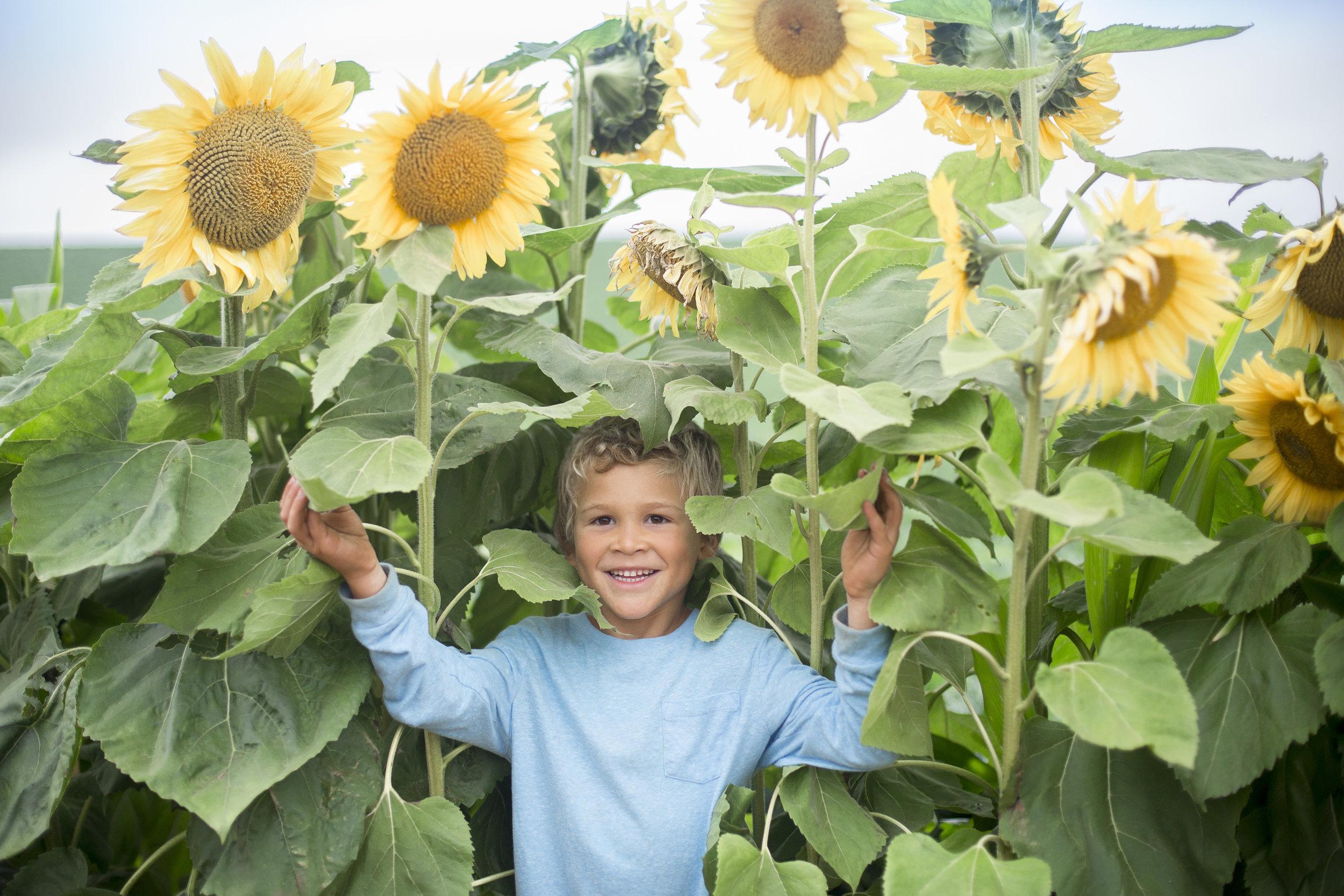 sunflowers20161R0A0043.jpg