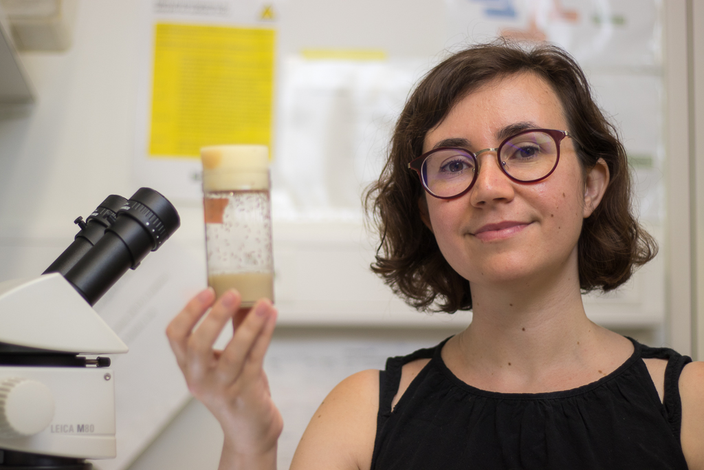 Gwénaëlle Bontonou - I obtained my PhD in 2014 from the University of Paris-Sud. My graduate research, under the supervision of Claude Wicker-Thomas, focuses on the evolution of Drosophila pheromones. I worked with D. melanogaster and D. simulans populations with divergent male pheromonal profiles related to their geographical origin. I studied the impact of temperature on the synthesis of these pheromones as well as their role in the establishment of sexual isolation. I was also interested in the genetic changes that caused the variation and the evolution of these pheromonal profiles.Following my PhD I did my first postdoc in Martine Simonelig's lab where I worked on the molecular mechanisms of gene regulation by the piRNAs pathway in the Drosophila embryo.2018Postdoc at the University of Lausanne, SwitzerlandAdvisor: Roman Arguello2014-2018Postdoc at the Institut de Génétique Humaine, FranceAdvisor : Martine Simonelig2010 - 2014Ph.D. – Laboratoire Evolution, Génomes et Spéciation, FranceAdvisor : Claude Wicker-Thomas2008 - 2010M.Sc. in Evolutionary Biology at the University Paris-Sud, France