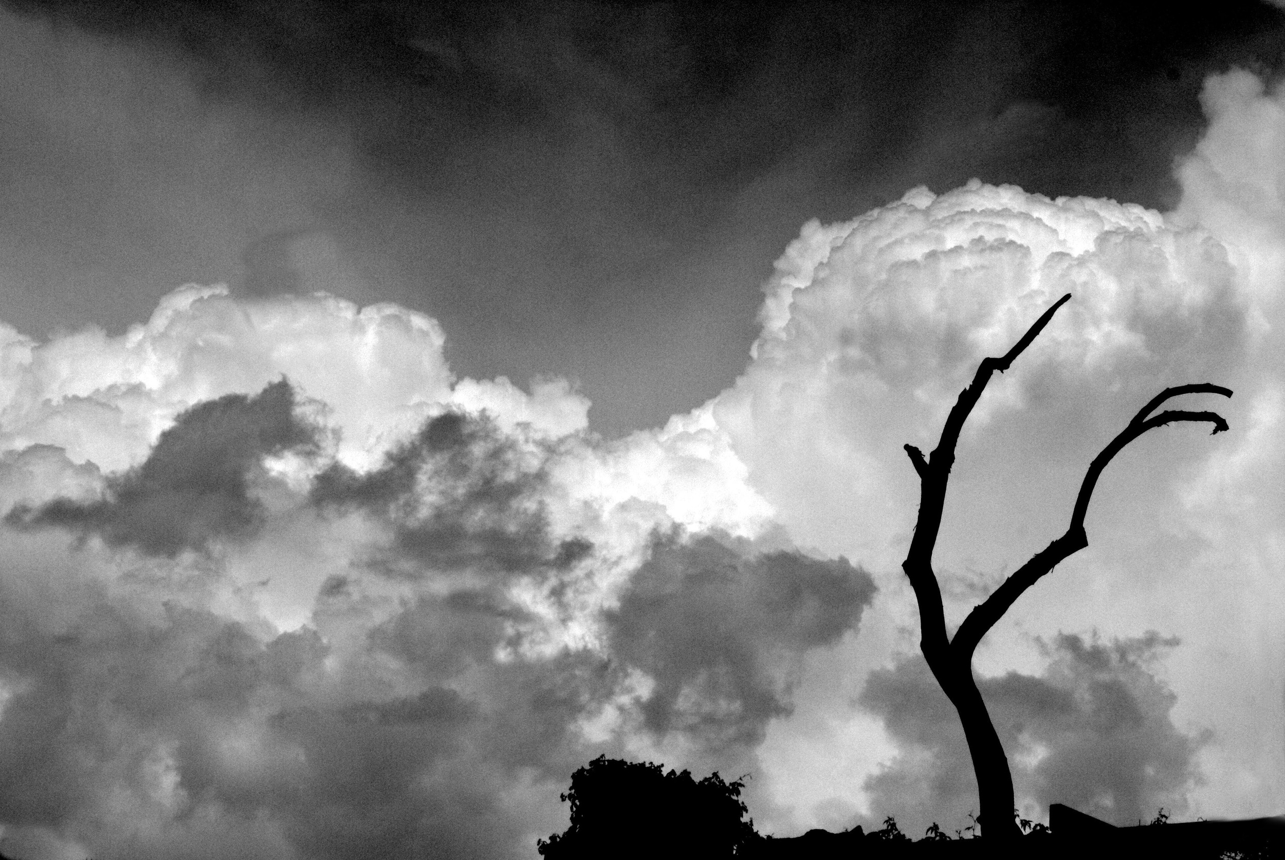 tree in clouds.jpg