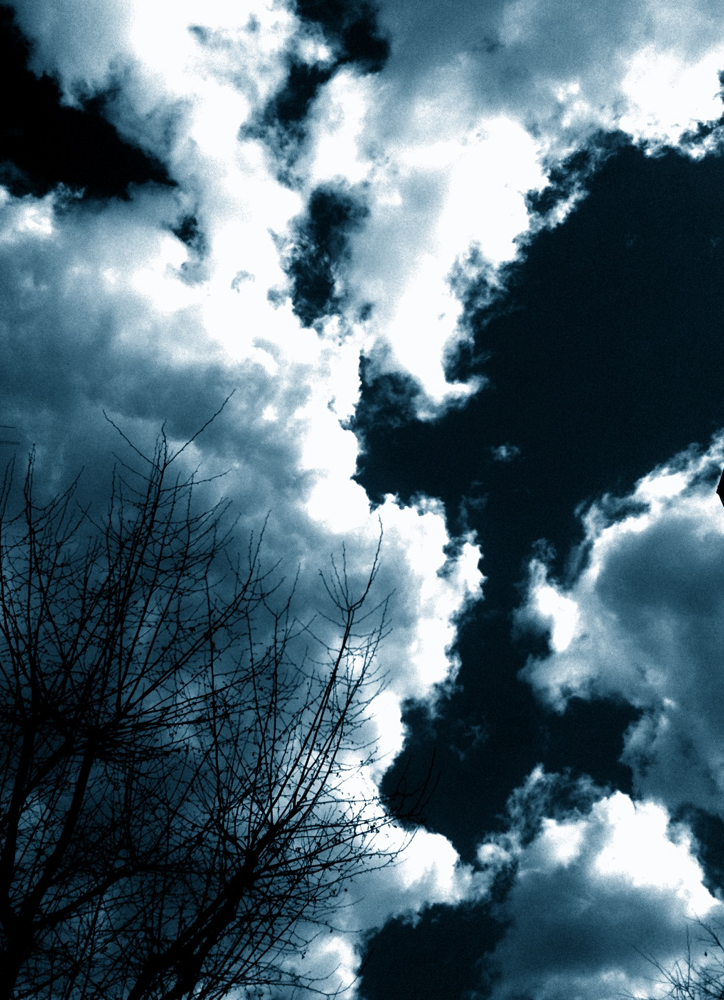 365 Day.285 A Cloud and A Tree.JPG
