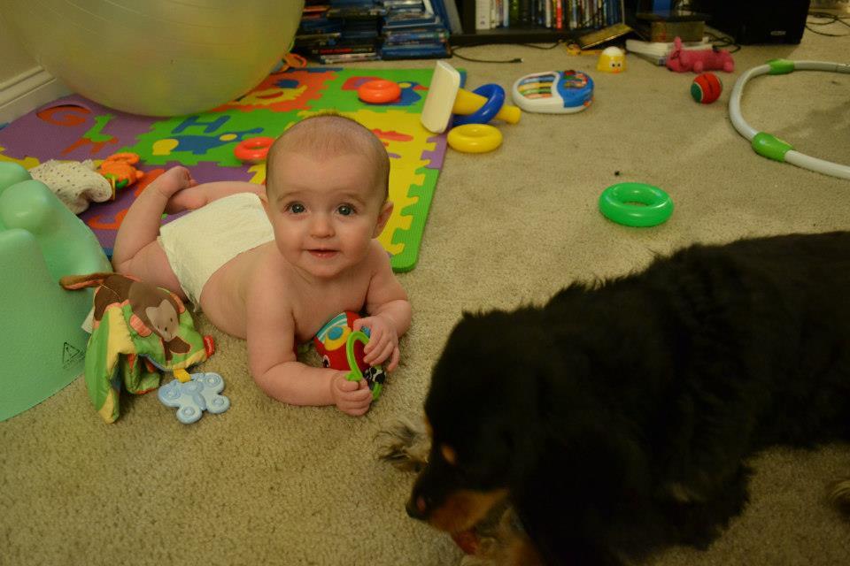 Daphne and Charlotte enjoying chew toys