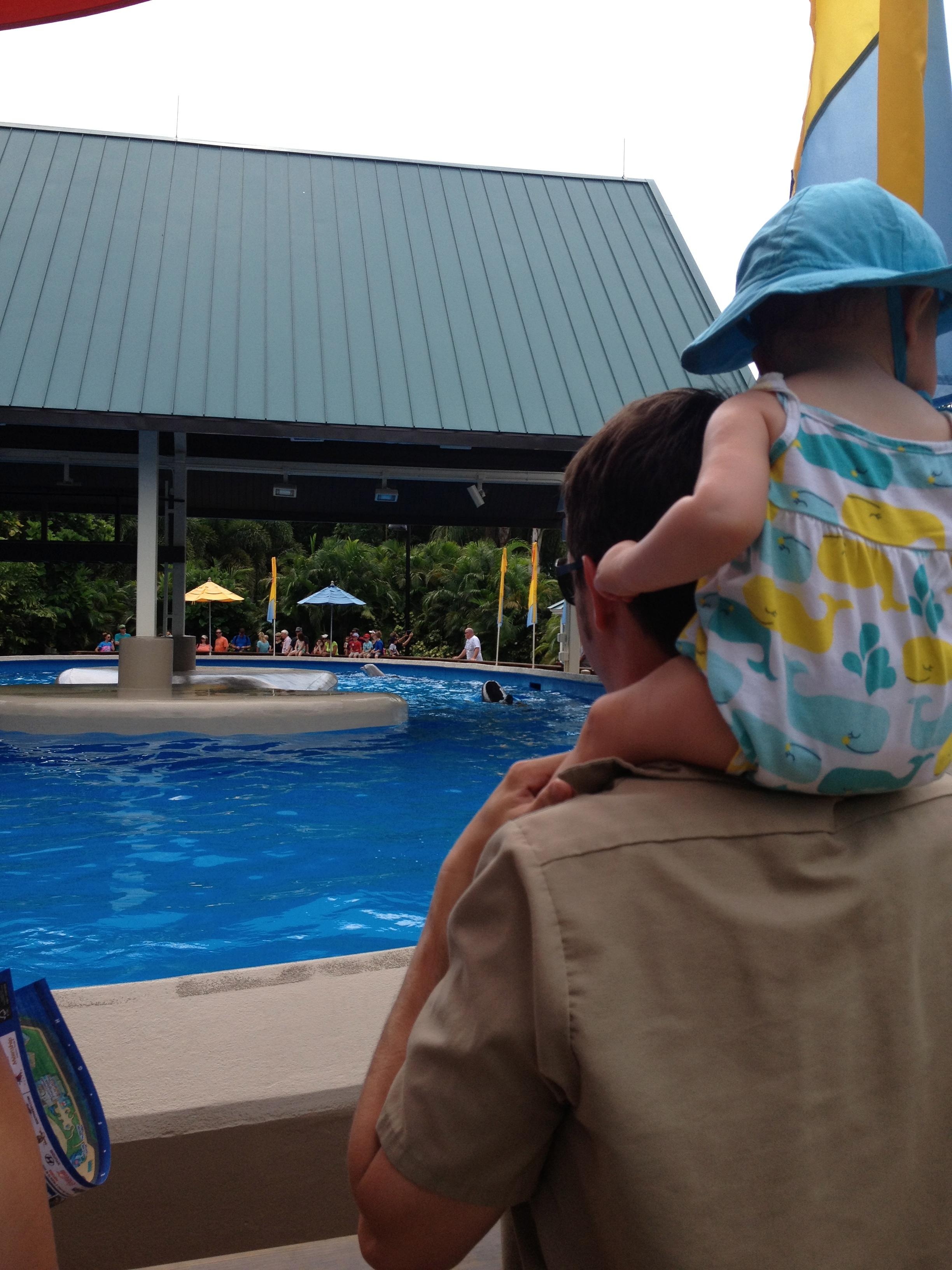 Watching the Dolphin Nursery