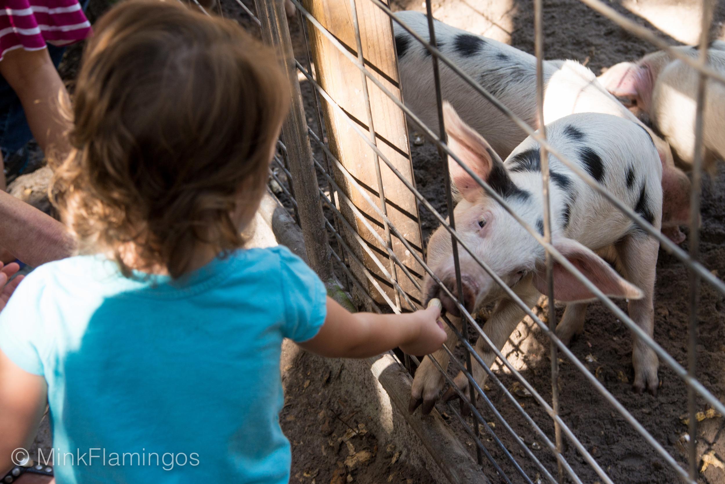2014_Oct_farmersmarket-21.jpg