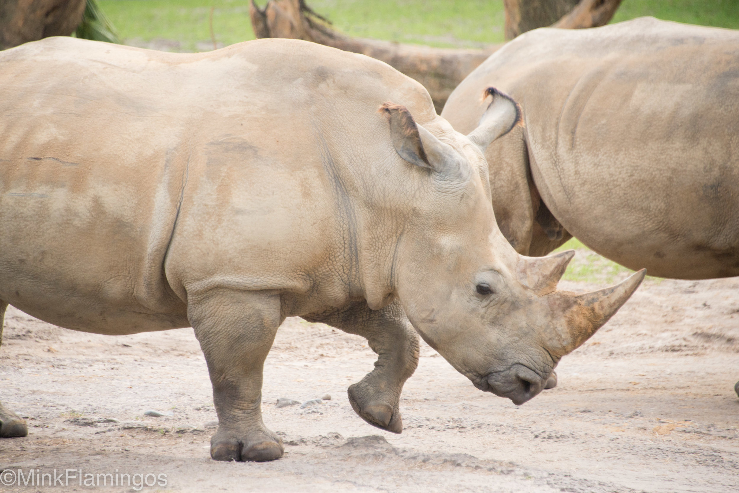 1/1250 is fast enough to capture a rhino mid-step with no motion blur