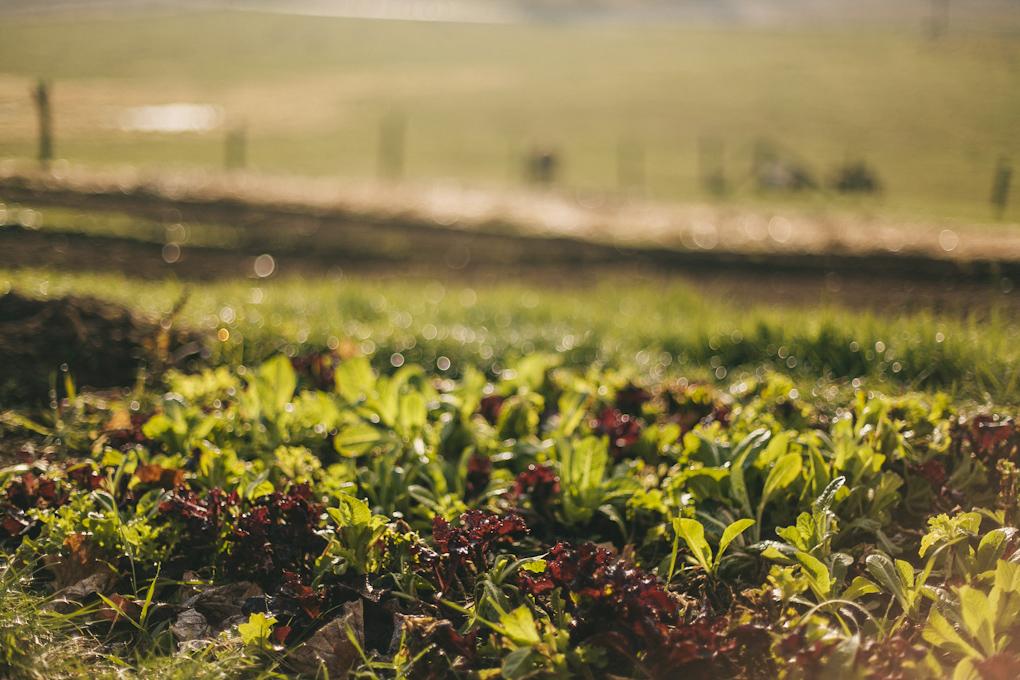 2012_farmblg1_ (6 of 16).jpg