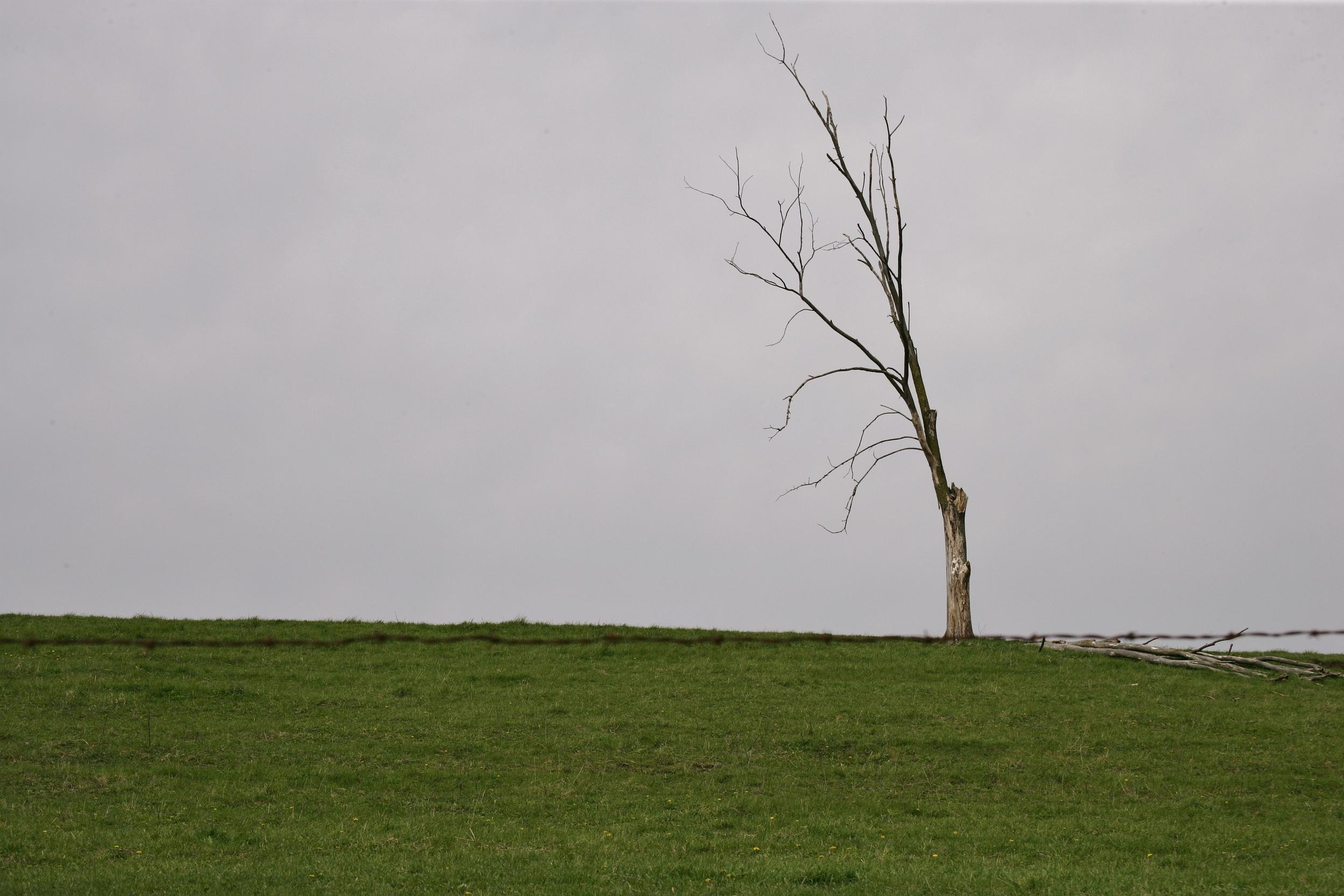 spring 2012 004.JPG