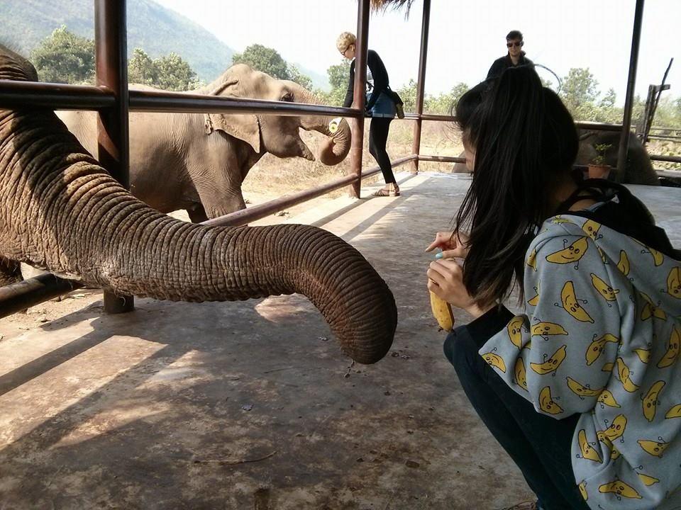 banana hoodie feeding a banana to an elephant