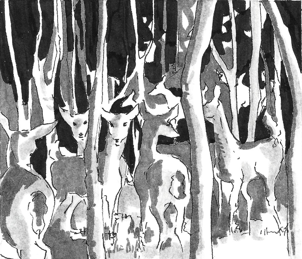 Deer, SN 2013