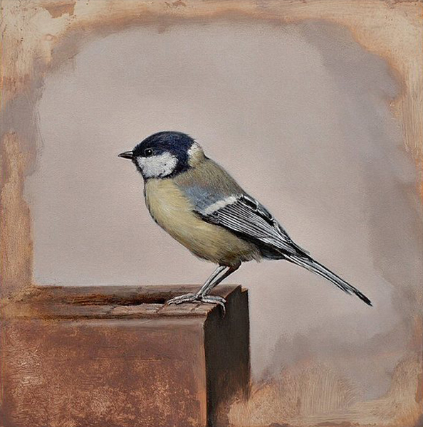 'Blue Titmouse', 10 x 10, Oil on Panel, SOLD