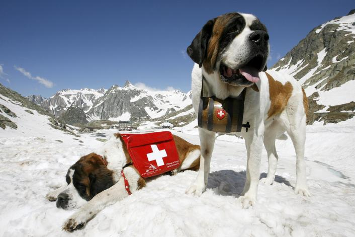 Naturally, there are St. Bernards waiting to help you if you are skiing in Switzerland! I need to get Rocco one of these whiskey barrels!