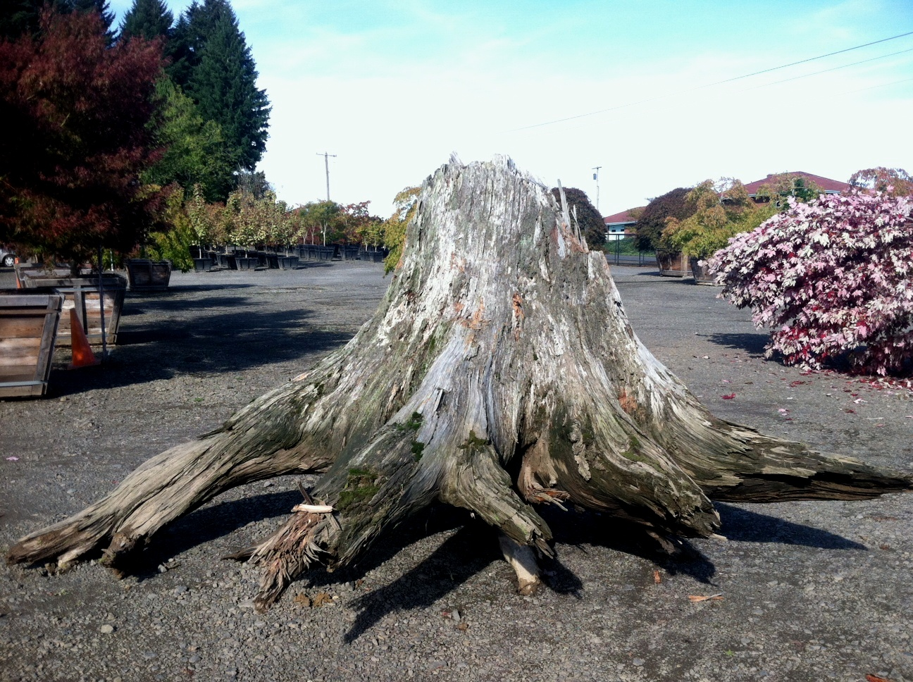 Shipping a weathered stump for a private garden