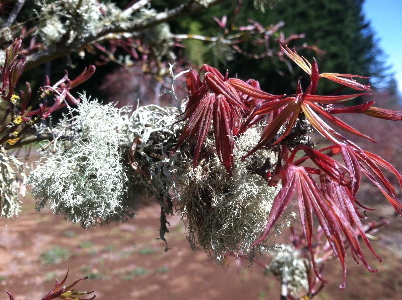 Leaves & lichen