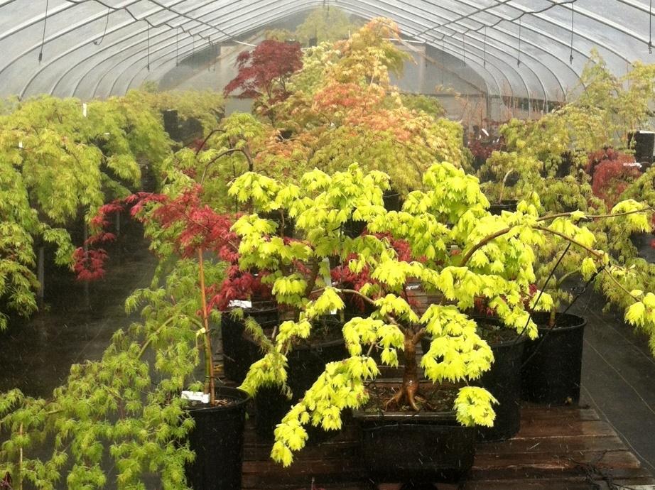 One of JNI's specialty greenhouses