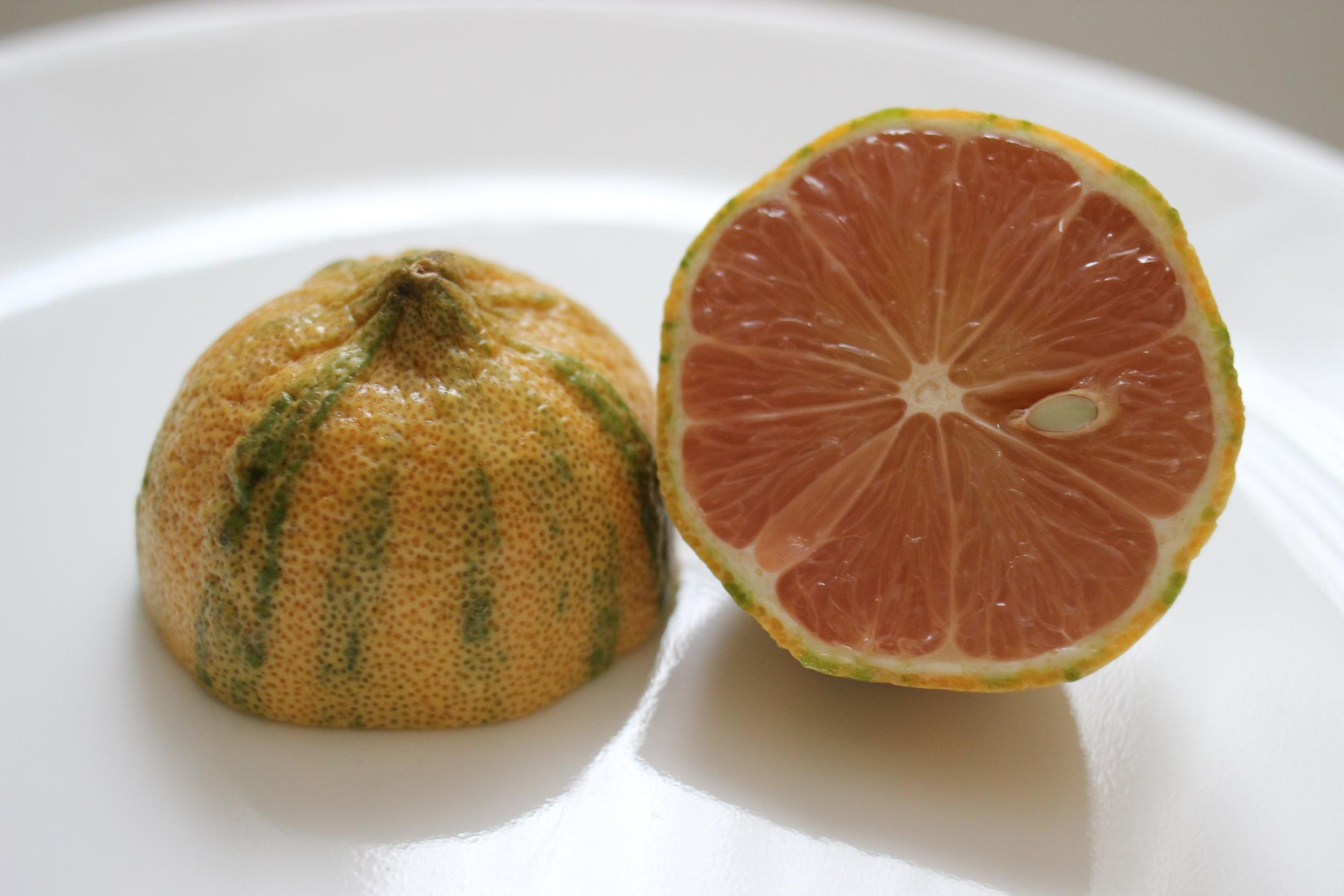 pink lemon striped