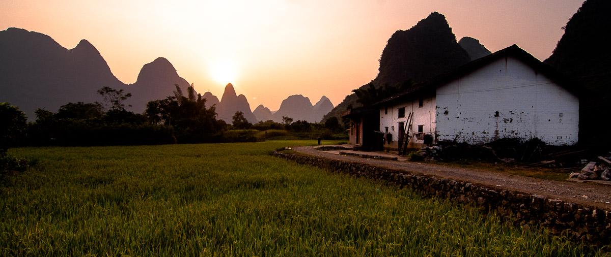 Guangxi Field Rice / CHINA