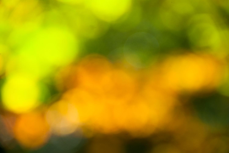 20121021_Morissolo_5163_df.jpg
