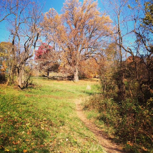 Walk in Cherokee Park
