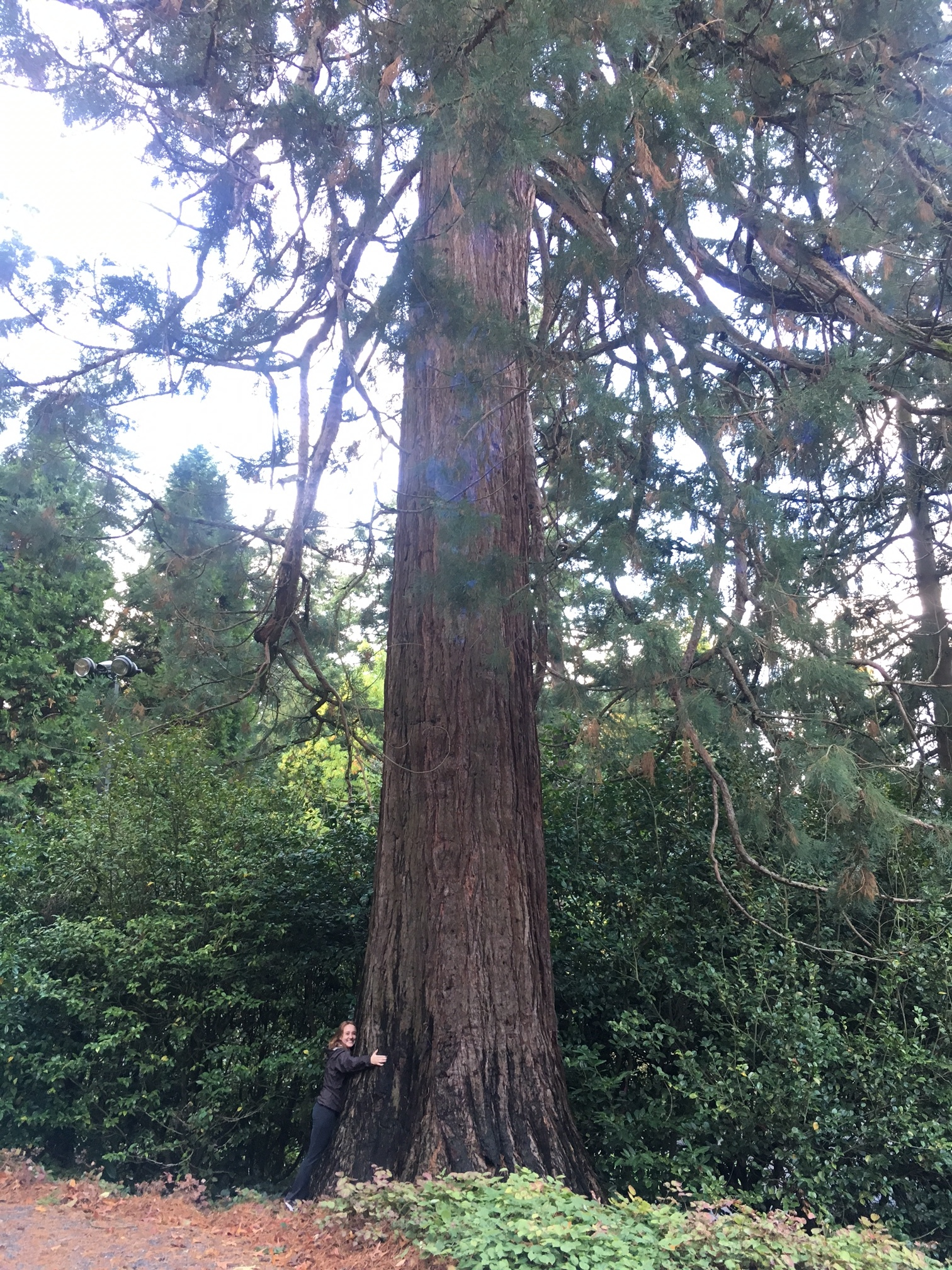 Samantha hugging an old growth tree in Portland's Rose Garden.