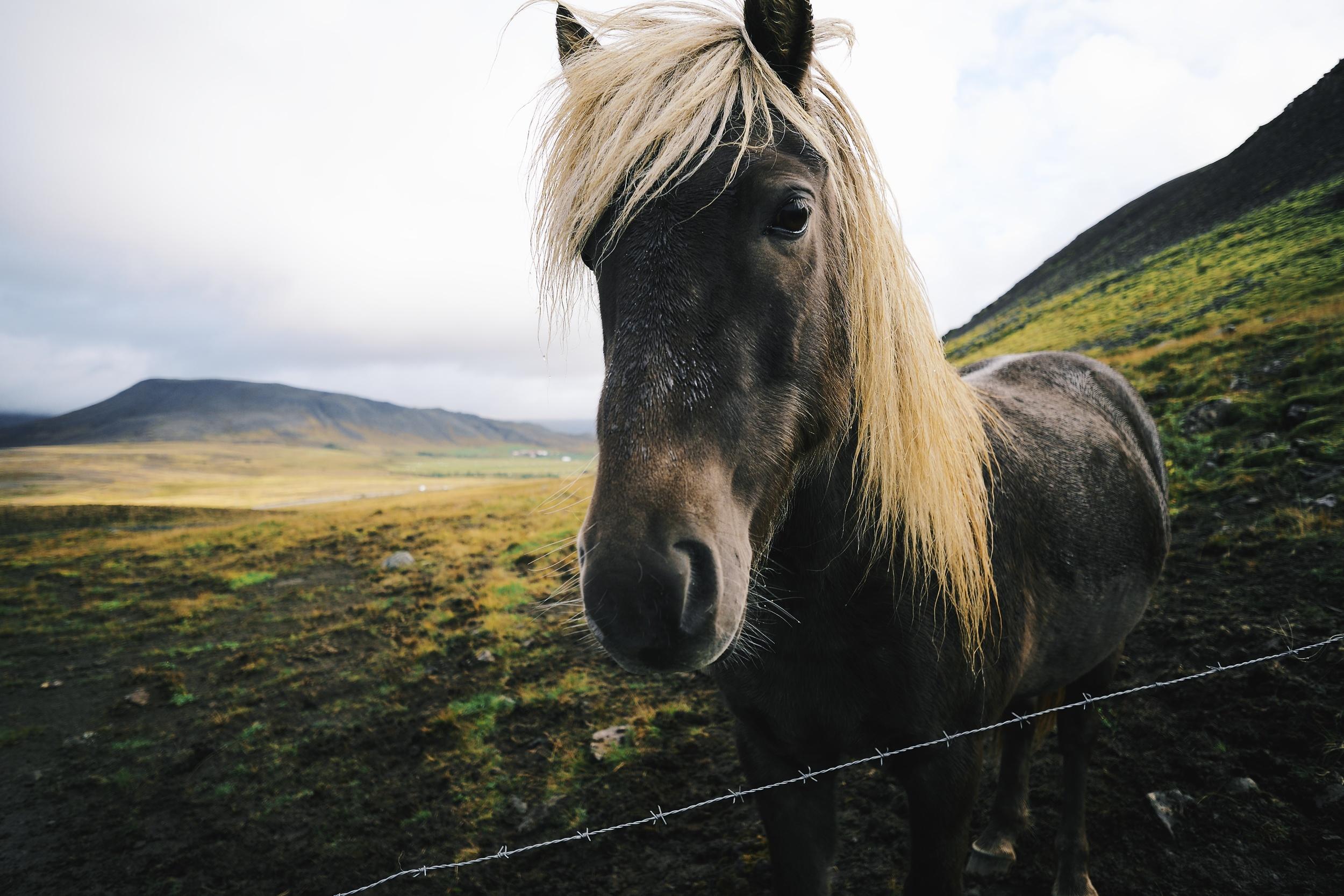 THE HORSES ARE CUTE!  Fuji: f2.8 @ 14mm, 1/1800, +1EV, ISO400