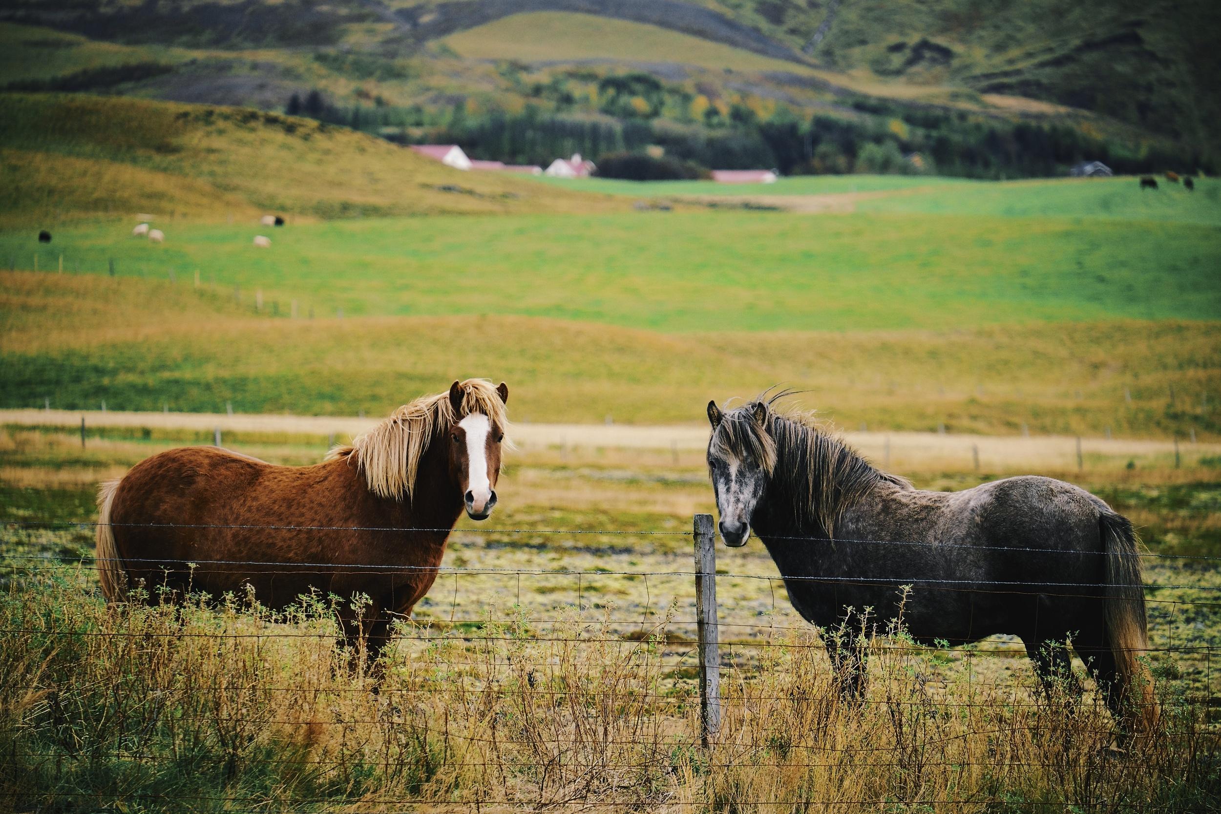 Hi horses.  Fuji: f4.8 @ 200mm, 1/950, ISO800