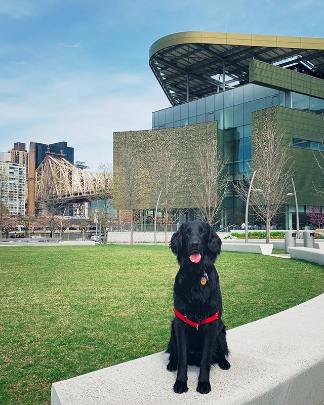 my dog, my building. That Morphosis facade looking quite magical. ~fun outing with @nycurbansketchers