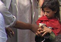 Distributing 3500 chicks to school children