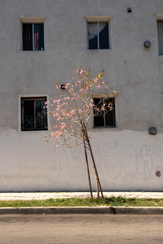 flowerspimp-16.jpg