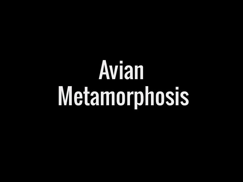 avianmetamorph title.jpg
