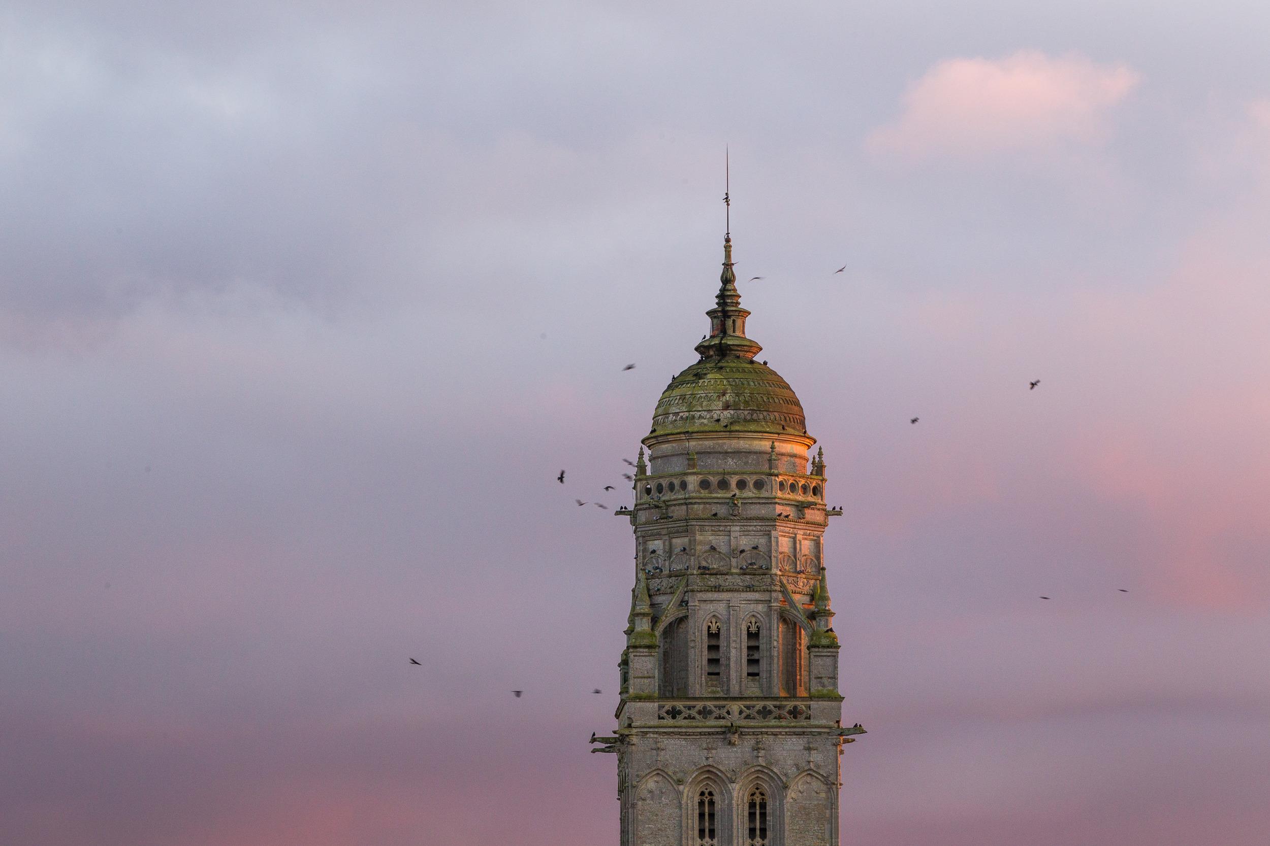Choucas des tours et le clocher - Normandie sauvage