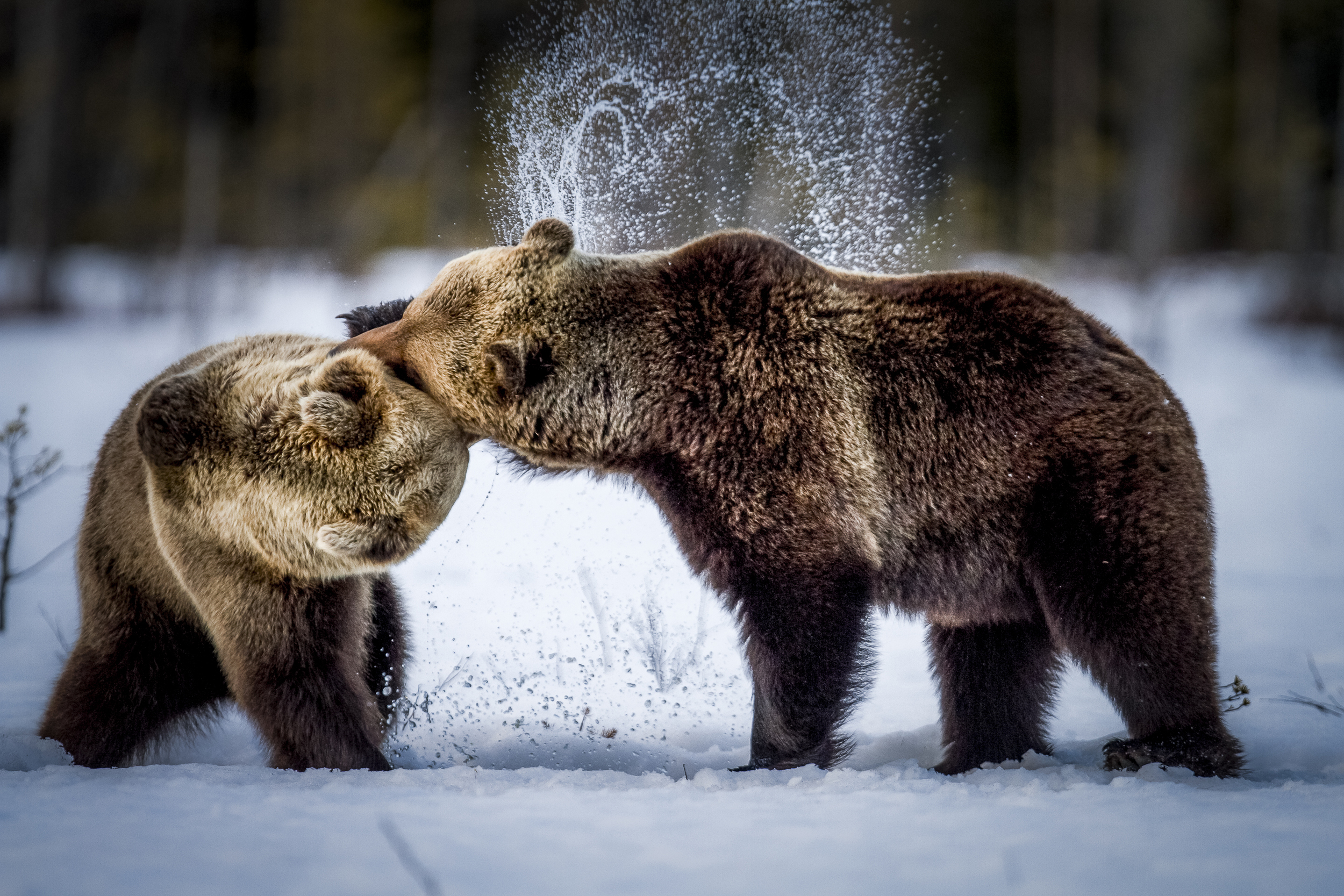 stephaneleroy_wild_finland_05.jpg
