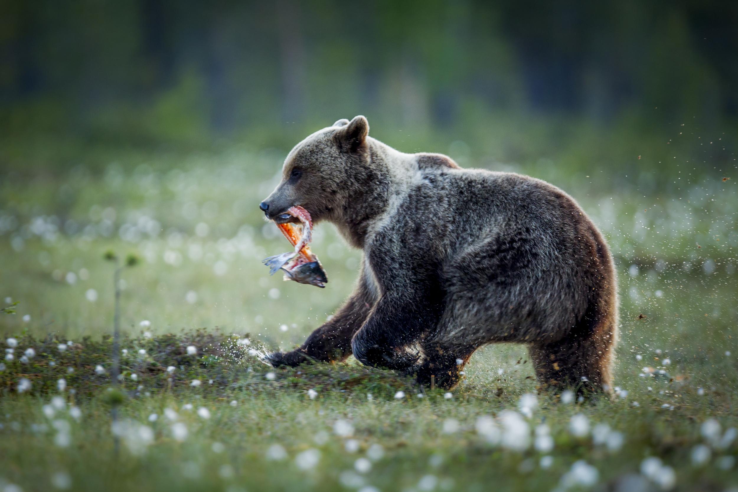 stephaneleroy_wild_finland-15.jpg