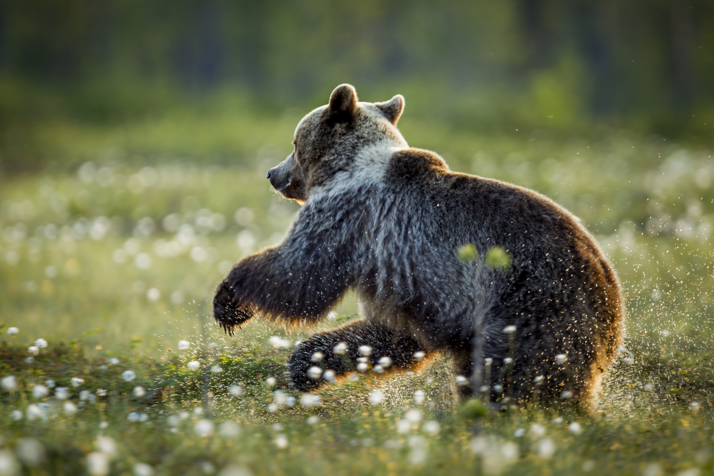 stephaneleroy_wild_finland-20.jpg